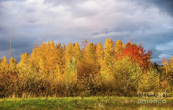 University Of Washington Wall Art - Photograph - Autumn Trees by Marv Vandehey