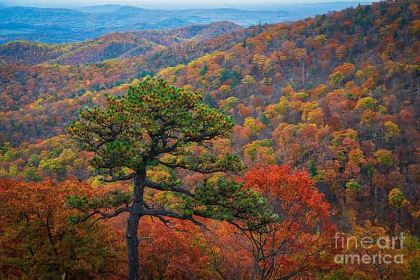 Shenandoah Wall Art - Photograph - Autumn Trees  by Michael Ver Sprill