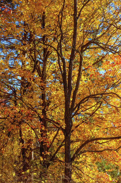 Photograph - Autumn Trees. by Rob Huntley