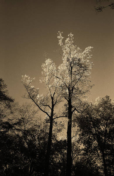 Photograph - Autumn Trees Sepia 2017 by Frank Romeo