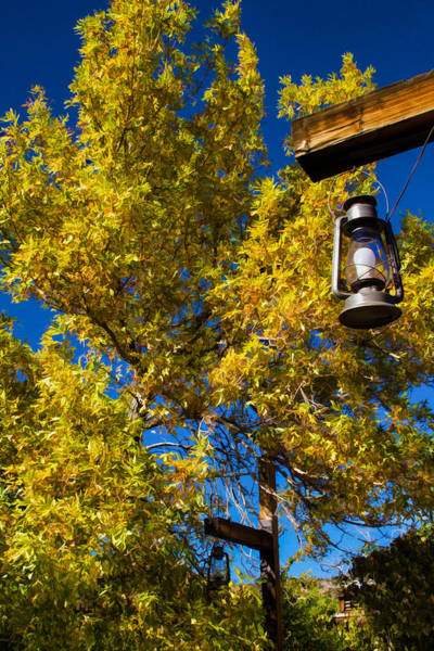 Photograph - Autumn Trees With Lantern 2 by Bonnie Follett
