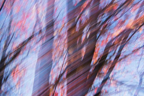 Photograph - Autumn Trees by Yulia Kazansky