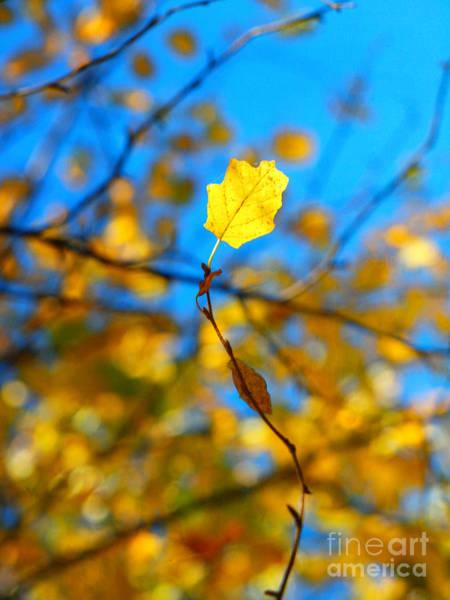 Photograph - Autumn Twist by Tara Turner