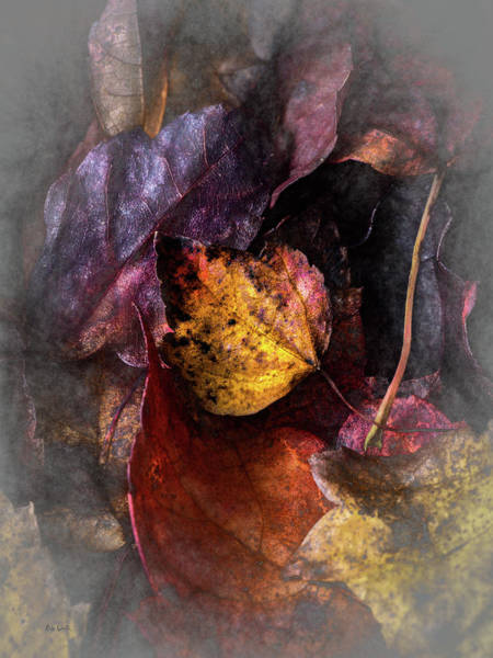 Photograph - Autumn Under Glass by Bob Orsillo