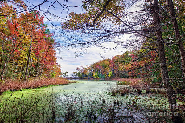 Photograph - Autumn View Through The Trees Of A Chesapeak Bay Lake by Patrick Wolf