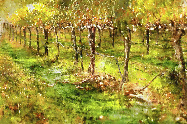 Photograph - Autumn Vineyard by Brandon Bourdages