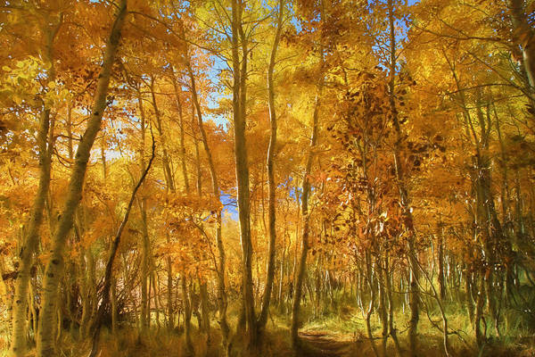 June Lake Photograph - Autumn Walk Among The Aspens by Donna Kennedy