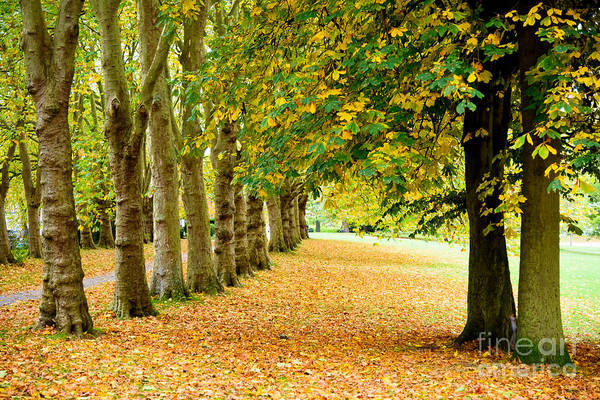 Photograph - Autumn Walk by Colin Rayner