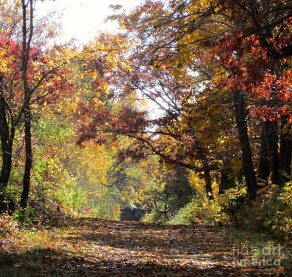 Photograph - Autumn Walk by Kathie Chicoine