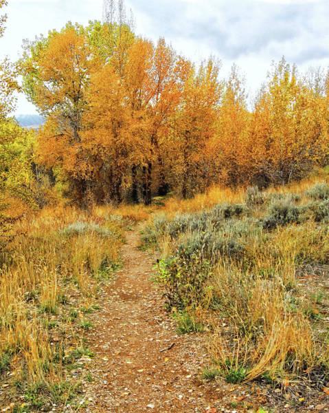 Photograph - Autumn Walk Photo by David King
