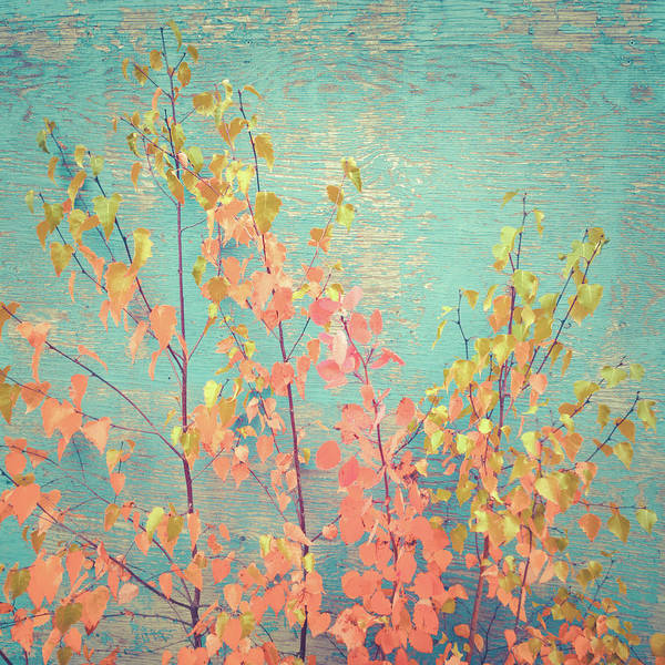 Photograph - Autumn Wall by Ari Salmela
