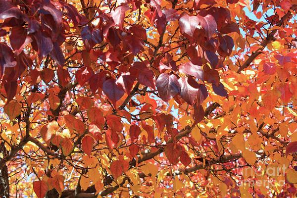 Wall Art - Photograph - Autumn Warmth by Carol Groenen