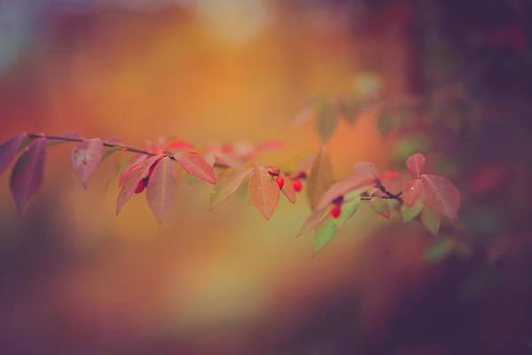 Wall Art - Photograph - Autumn Warmth by Shane Holsclaw