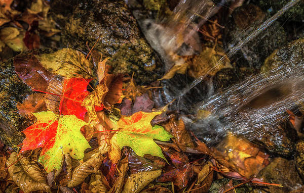 Photograph - Autumn Wash  by Donnie Whitaker