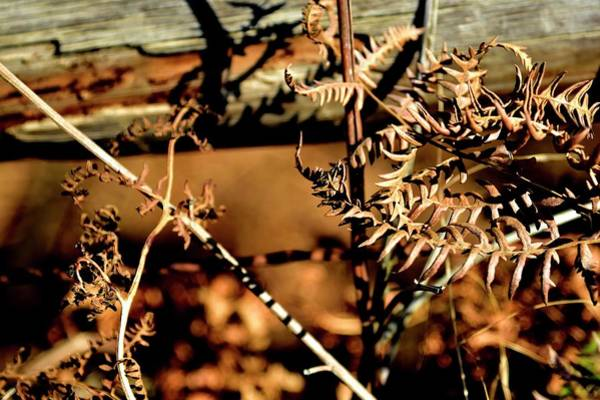 Photograph - Autumn Weeds by Jerry Sodorff