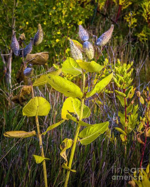 Photograph - Autumn Weeds by Jon Burch Photography