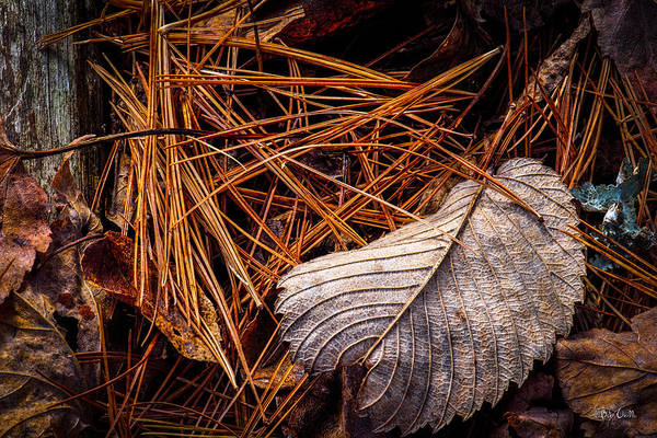 Photograph - Autumn Whispers by Bob Orsillo