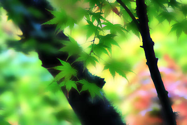 Digital Art - Autumn Wind by Vicki Hone Smith