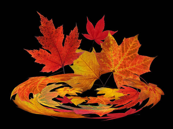 Photograph - Autumn Winds - Colorful Leaves On Black by Gill Billington