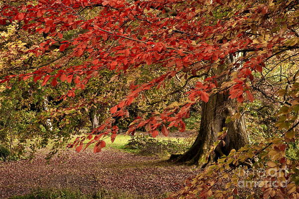 Photograph - Autumn Woodland Color by Martyn Arnold