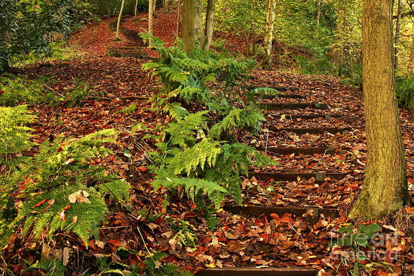 Photograph - Autumn Woodland Path by Martyn Arnold