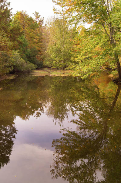 Photograph - Autumn Woodland Pond At Jeffries Creek by MM Anderson