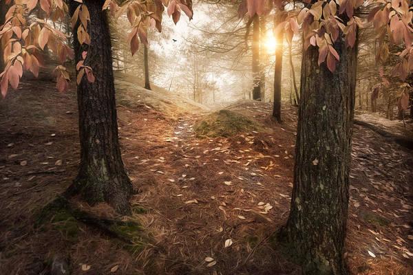 Photograph - Autumn Woodland by Robin-Lee Vieira