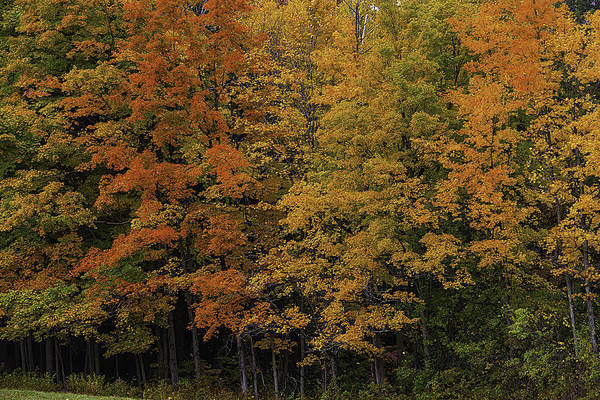 Photograph - Autumn Woods by Garry Gay