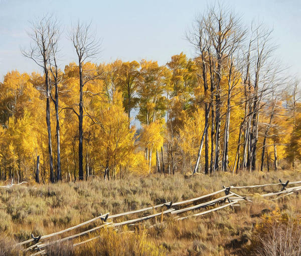 Photograph - Autumn Yellow And Gold by Wes and Dotty Weber