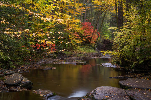 Photograph - Autumn Zen Ricketts Glen State Park Pa by Terry DeLuco