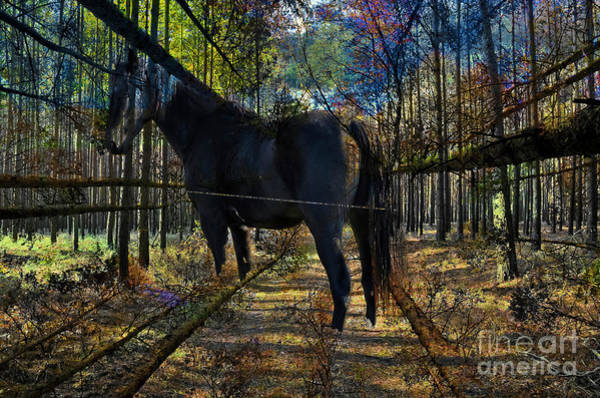 Digital Art - Horse In The Autumn Forest by Silva Wischeropp