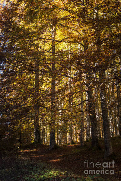 Wall Art - Photograph - Autumnal Forest by Yuri San