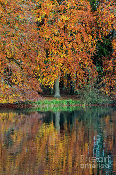 Rippling Photograph - Autumnal Glory by Tim Gainey