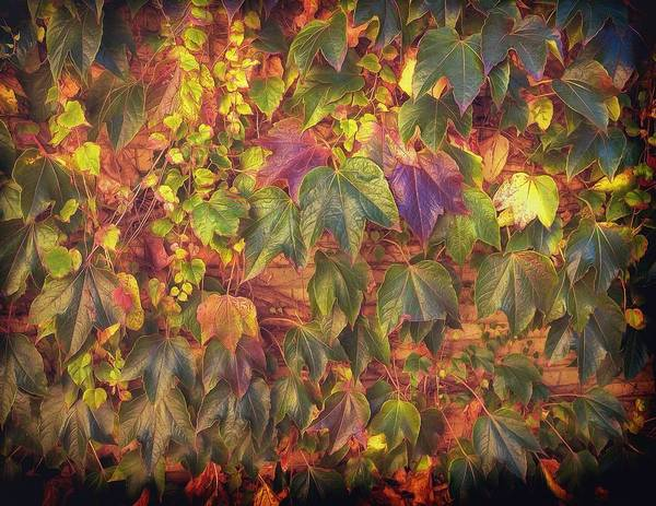 Photograph - Autumnal Leaves by Leigh Kemp