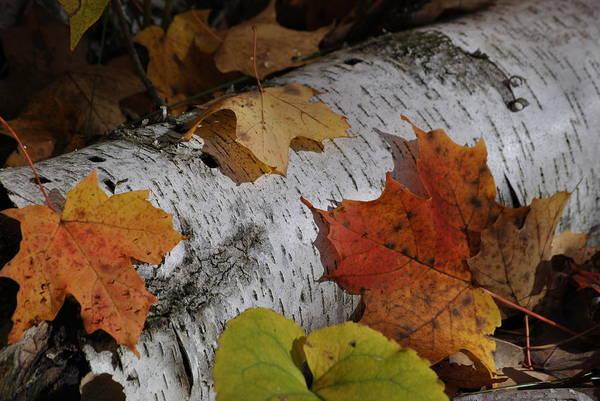 Photograph - Autumnal Melange by Linda Goad