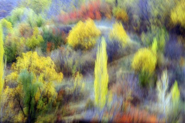 Autumnal Art Print by Robert Shahbazi