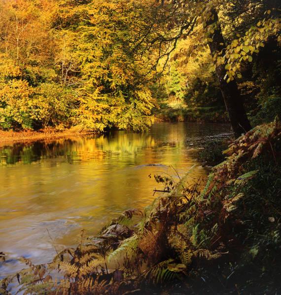 Autumnal Tamar River Devon Art Print