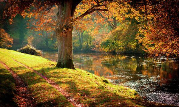 Photograph - Autumnal Tamar River Walk, Devon, England. by Maggie McCall