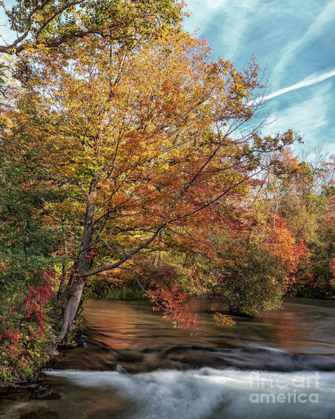 Photograph - Autumnal Tree by Rod Best