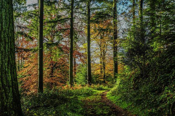 Stourhead Wall Art - Photograph - Autumnal Walk Through Beaumont's Woods by Frank Etchells