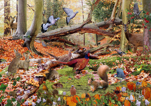 Photograph - Autumnal Woodland Animals by Warren Photographic