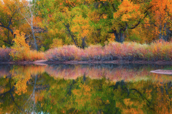Photograph - Autumn's Color Palette  by Darren White