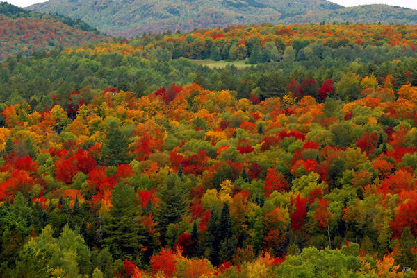 Adirondack Mountains Painting - Autumns Colors by David Lee Thompson