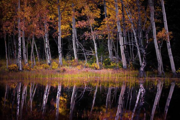 Photograph - Autumn's Dream by John De Bord