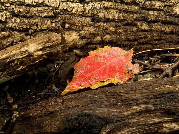 Wall Art - Photograph - Autumn's End by Jim DeLillo
