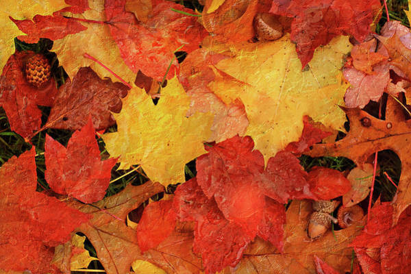 Photograph - Autumns Gifts by Jill Love