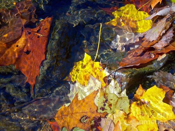 Photograph - Autumn's Jewels by Pamela Clements