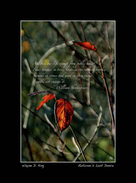 Photograph - Autumns Last Dance Poster by Wayne King