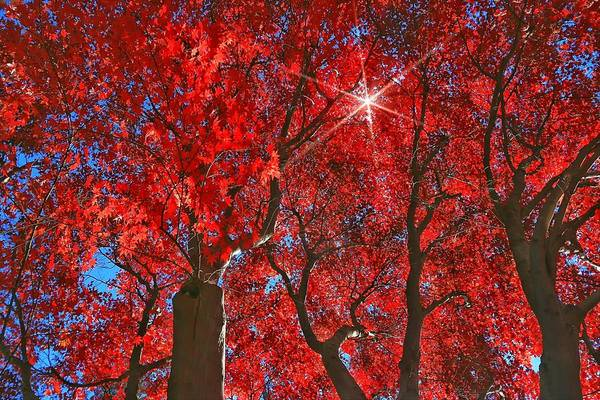 Photograph - Autumn's Leaves by Frank G Montoya