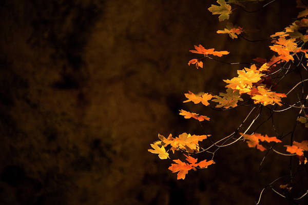 Wall Art - Photograph - Autumn's Paintbrush by Aaron Bedell